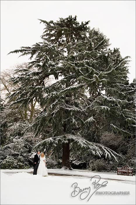 cedar tree snow bride and groom